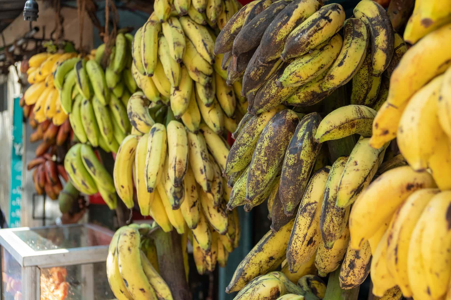 Bananensorten Sri Lanka