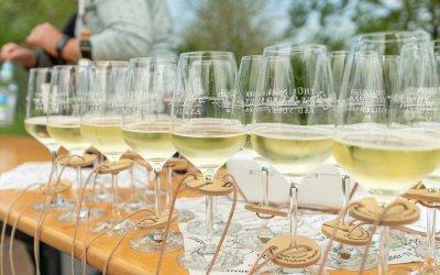 How to…Weinwandern in Bad Sulza