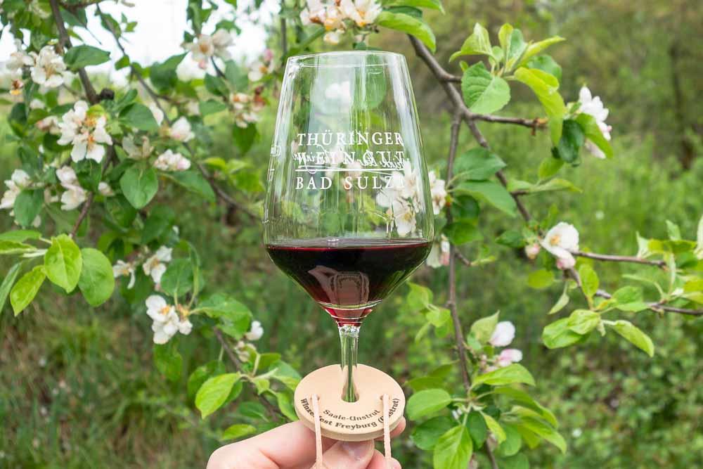 Pinotin Rebsorte