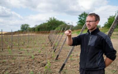 Interview mit Jörn Goziewski: Die Wiederbelebung des Erfurter Weinbaus