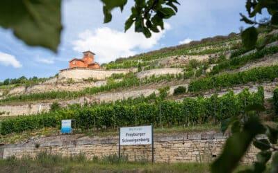 Saale-Unstrut: Ausflug ins nördlichste Weinanbaugebiet Deutschlands
